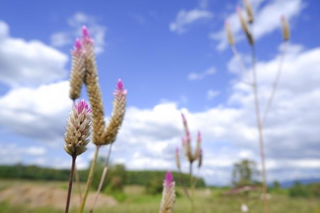青い空を背景に自然の中のガラスの花