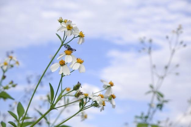 Белый цветок в природе против голубого неба