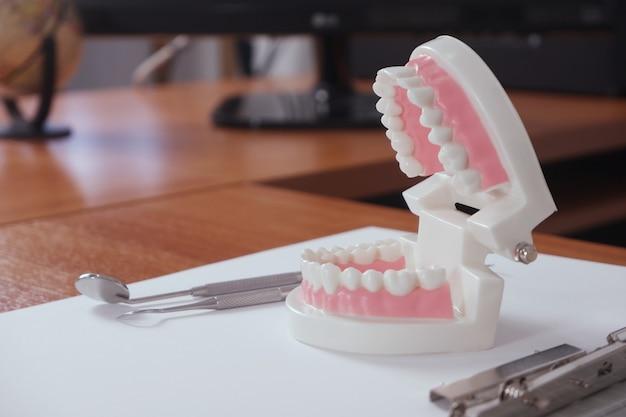 歯科医のテーブルの上の歯のモデル