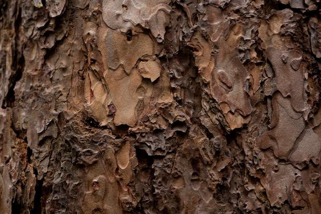 剥離、ひびの入った古い木のテクスチャ背景