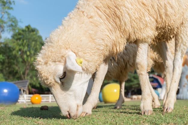 緑の芝生の牧草地で羊