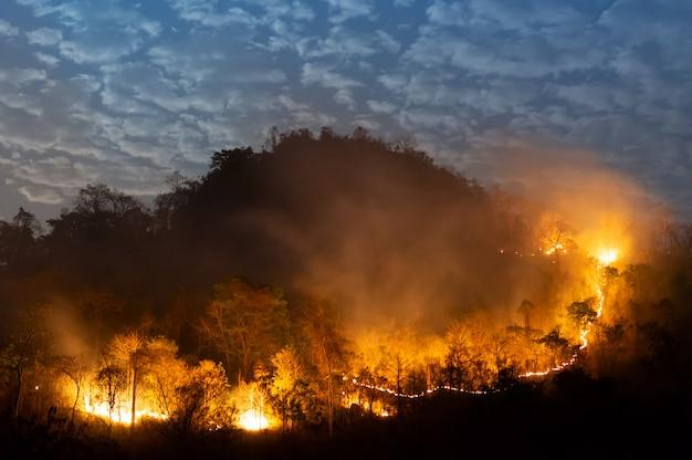 山火事、野火。
