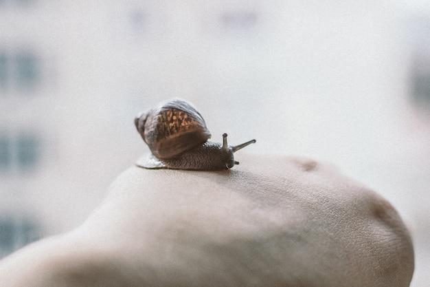 Маленькая красивая улитка на вашей руке
