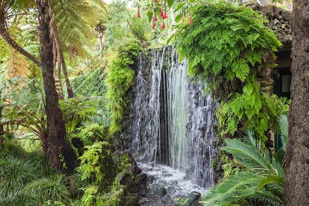 マデイラ島の滝
