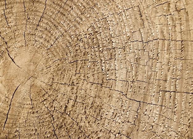 木のテクスチャカット