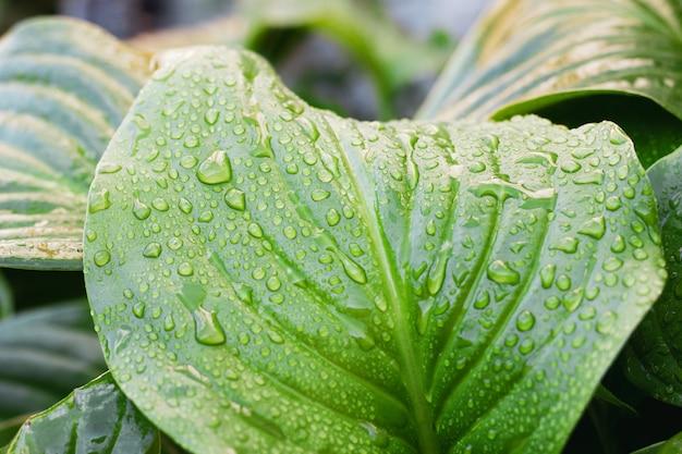 水と熱帯の葉のクローズアップが値下がりしました。