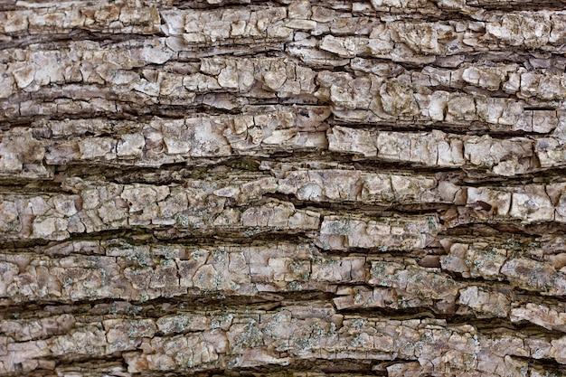 木の樹皮のクローズアップのテクスチャ