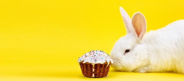 パステルイエローの背景にイースターカップケーキとイースターの白いふわふわライブウサギ。イースター休暇のコンセプト