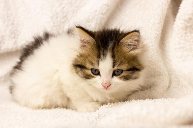 Маленький спящий котенок в постели, крупный план. пушистая красивая кошка в мягком постельном белье