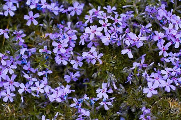 青い花のクローズアップの背景。自然な自然な花の背景。