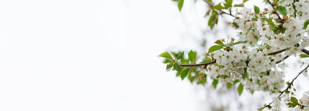 開花木のクローズアップのパノラマ。碑文の下に置きます。