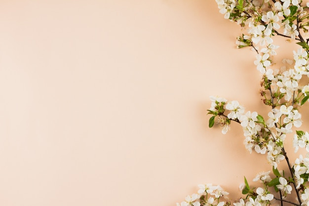 パステル調の背景に開花枝