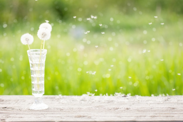 屋外の木製のテーブルの上に花瓶に白いタンポポ