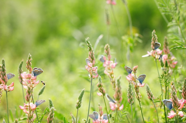 青い蝶、自然の美しい背景と緑の背景にピンクの花