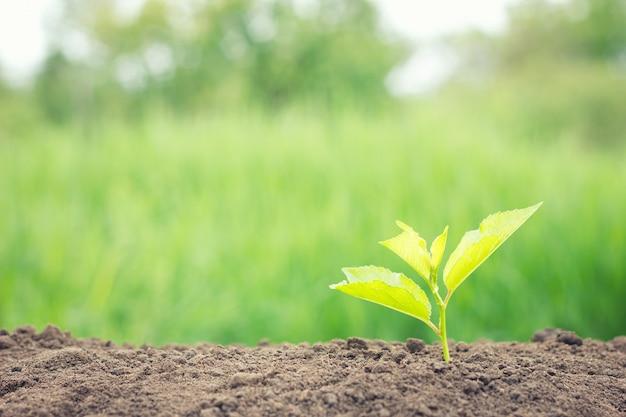 木の若い芽