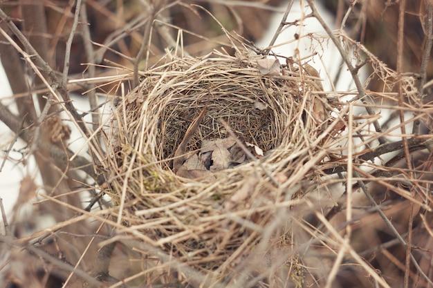 野鳥の古い放棄された巣。早春の小さなスズメの鳥の古いカップの巣