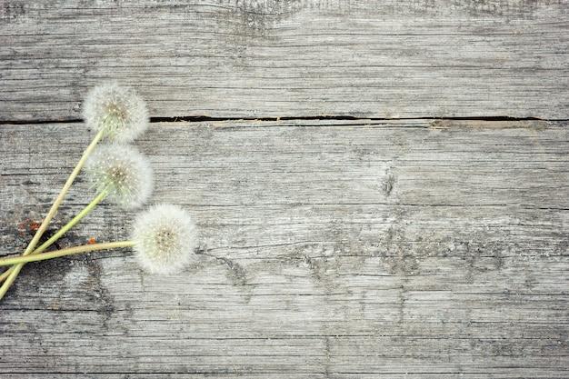 木製の背景に白いタンポポ。古い背景の上の野生の花