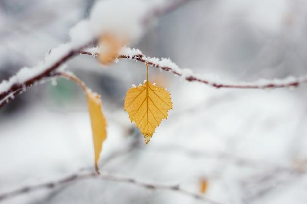 初冬の雪の中で秋の葉