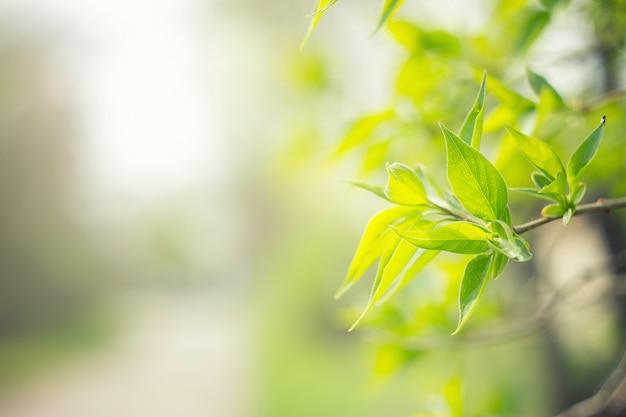 若い緑の葉の木。自然な緑の背景をぼかした写真