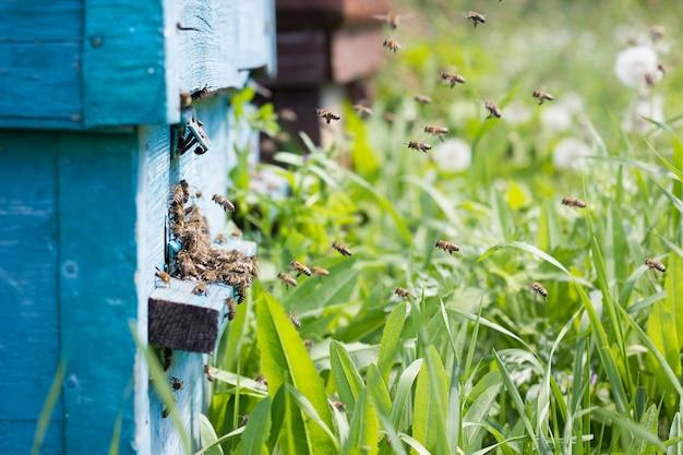 ミツバチは蜜を巣箱に運びます。