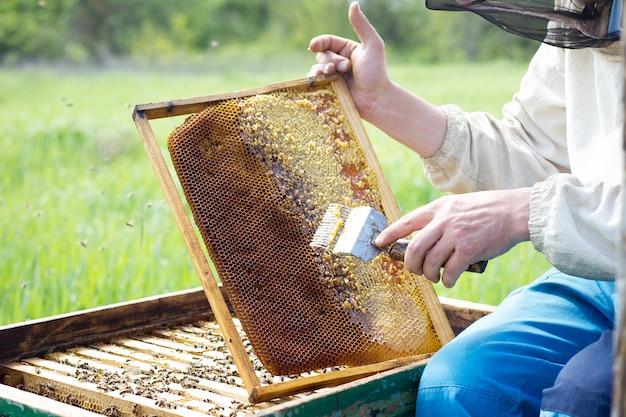 養蜂家は蜂蜜フレームをきれいにします。夏には男が養蜂場で働いています。ミツバチの繁殖