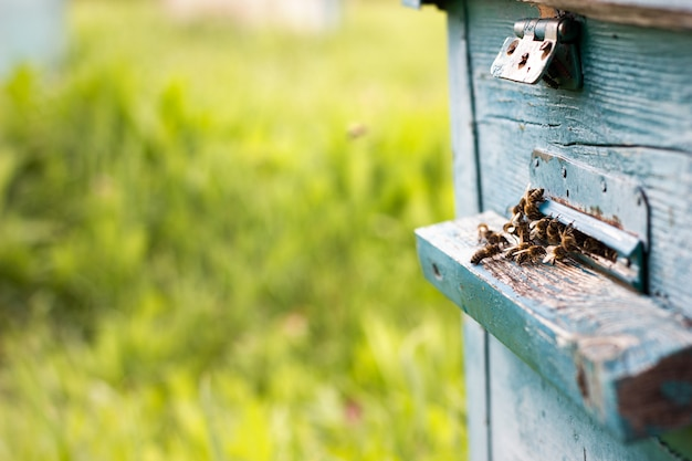 蜂が証拠から飛び出す
