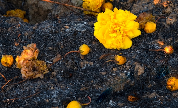 すすで覆われた地面の花