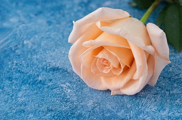 青と白のアクリルペイントの背景に桃色のバラ