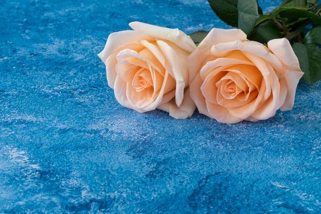 Две розы на синем фоне