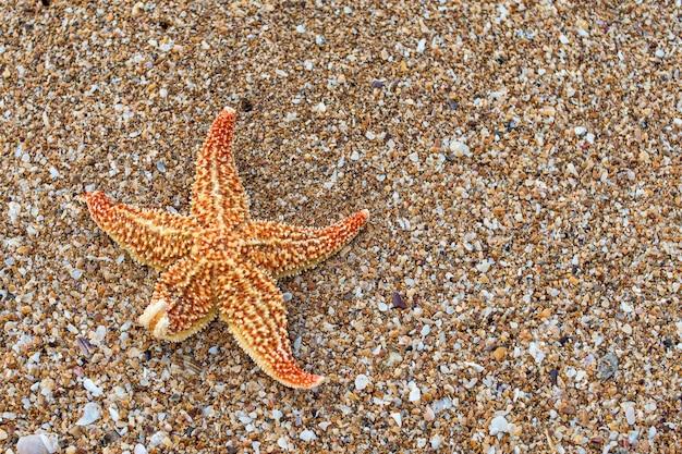 砂浜のビーチでオレンジ色のヒトデ