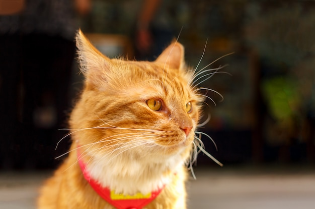 周りを見て美しい赤い猫