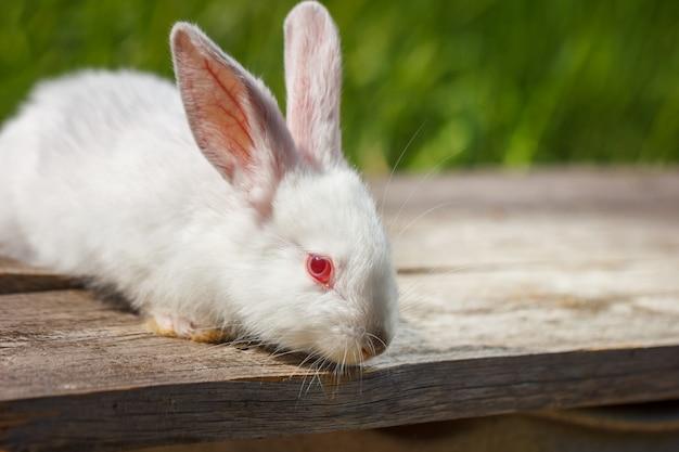 自然の緑の背景にかわいい白ウサギ