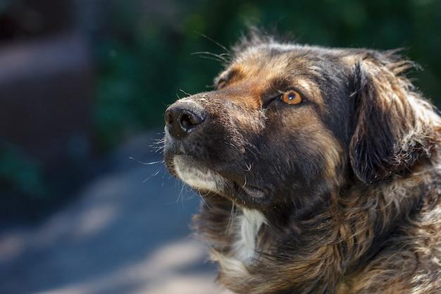 Морда собаки дворняга крупным планом естественный фон