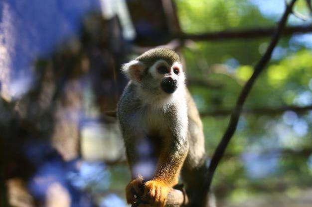 Маленькая обезьяна сидит на ветке