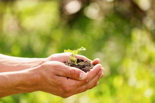 Росток в руках на естественном зеленом фоне