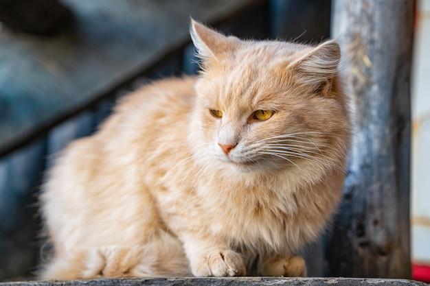 路上でかわいいふわふわ猫の肖像画