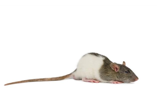 小さなマウスをクローズアップ