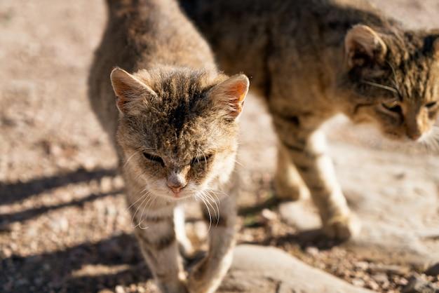 路上で恋をしている二匹の猫。ストリートライフ。