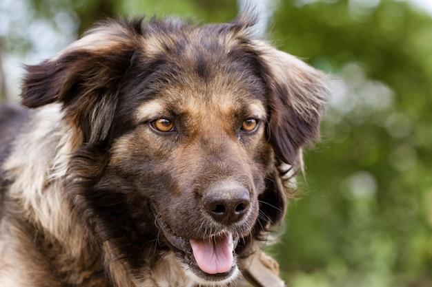 自然を背景にクローズアップで犬の肖像画