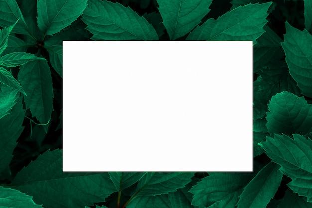 背景としての緑の葉とラベルの白い紙。