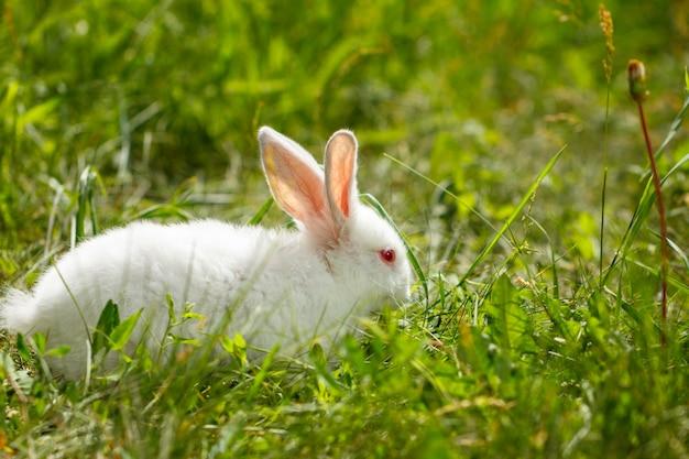 自然の緑の背景に美しいかわいい白ウサギ