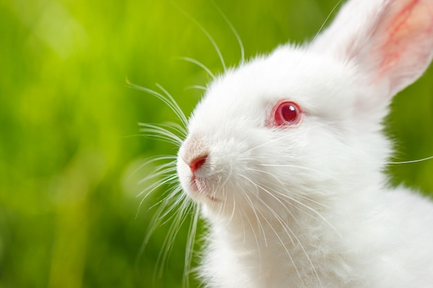 緑の背景にかわいい小さな白いウサギ