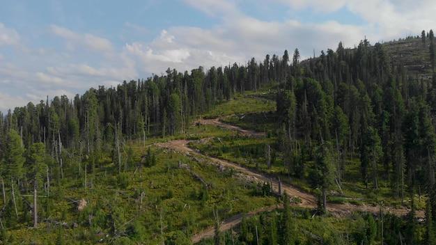 伐採された森林ビュー