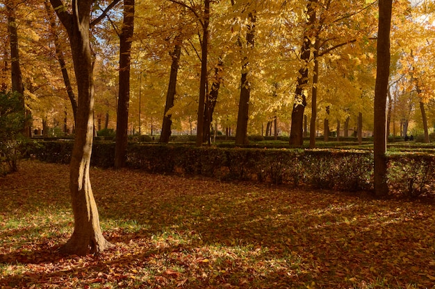 秋のパルテールの庭の茶色の葉のある木