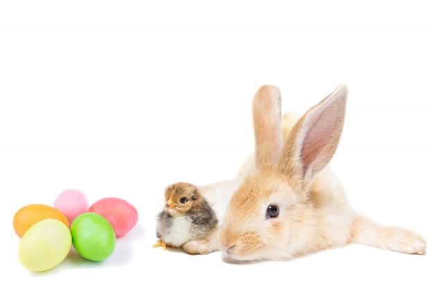イースターのウサギとチキン