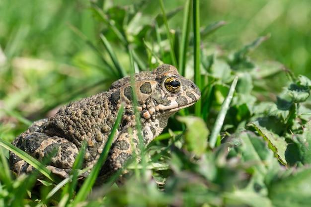 草の上のカエル