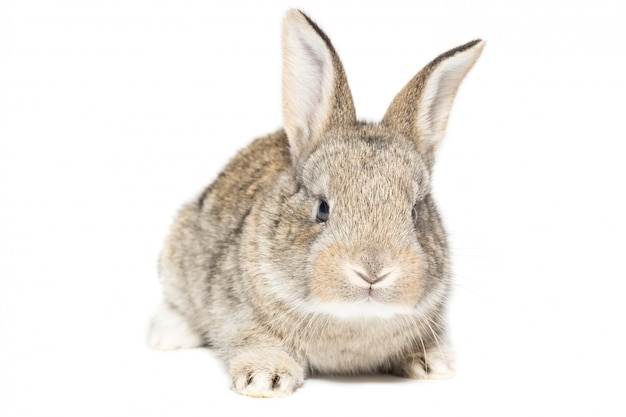 Кролик на белом