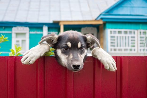 邪悪な犬に注意してください