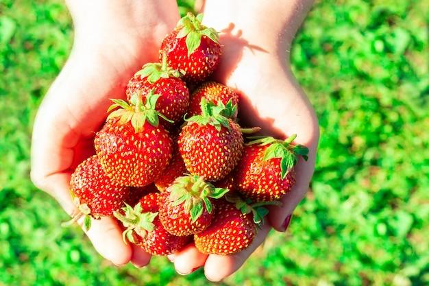 手の中のイチゴ