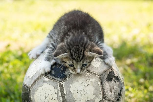 Котенок с футбольным мячом